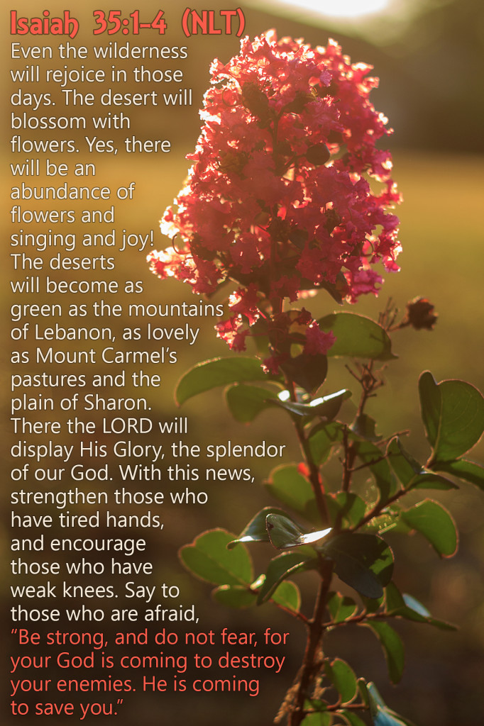 "Isaiah 35:1-4 (NLT) Even the wilderness will rejoice in those days. The desert will blossom with flowers. Yes, there will be an abundance of flowers and singing and joy! The deserts will become as green as the mountains of Lebanon, as lovely as Mount Carmel's pastures and the plain of Sharon. There the LORD will display His Glory, the splendor of our God. With this news, strengthen those who have tired hands, and encourage those who have weak knees. Say to those who are afraid, ""Be strong, and do not fear, for your God is coming to destroy your enemies. He is coming to save you."""